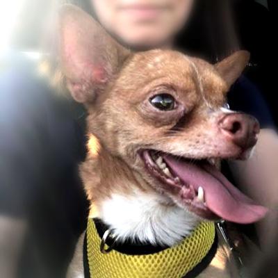 Sebastian Coastal Pet Rescue