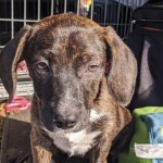 Adoptable (Official) Georgia Dogs for October 15, 2020