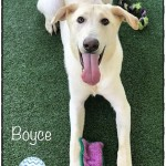 Adoptable (Official) Georgia Dogs for October 9, 2020