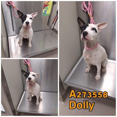 Dolly Macon Bibb County Animal Welfare