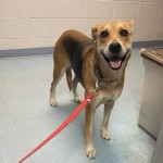 Adoptable (Official) Georgia Dogs for October 27, 2020