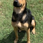 Adoptable (Official) Georgia Dogs for October 30, 2020