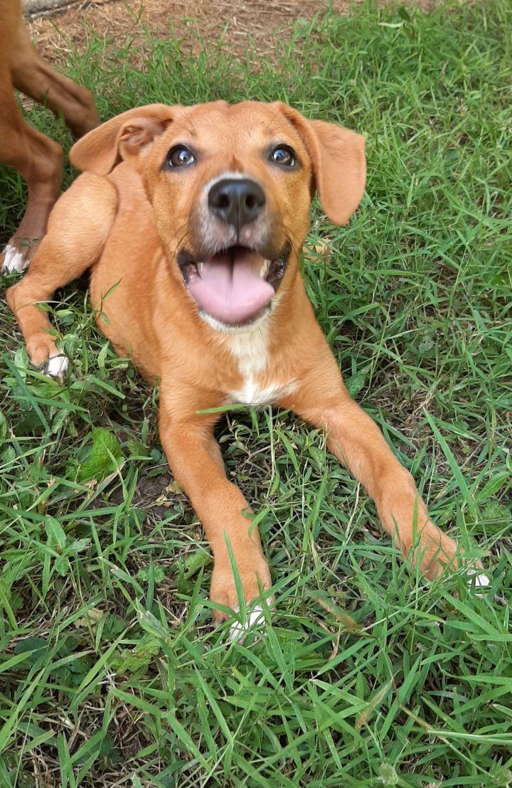 Lena Dogs Rock Rescue