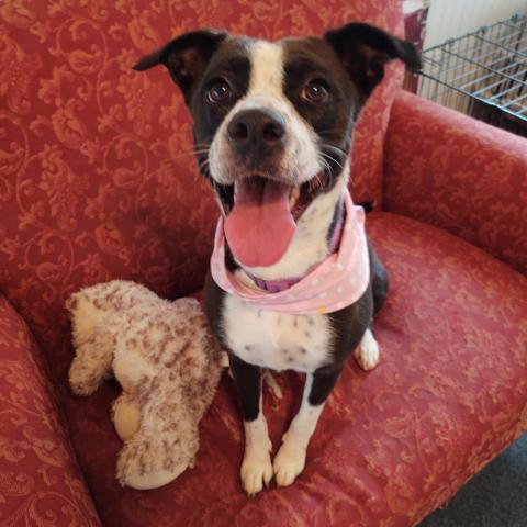 Lucy Humane Society Harris County GA