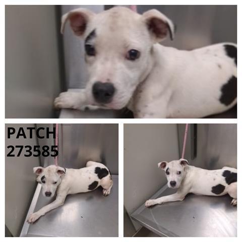 Patch Macon Bibb County Animal Welfare