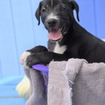 Adoptable (Official) Georgia Dogs for October 5, 2020