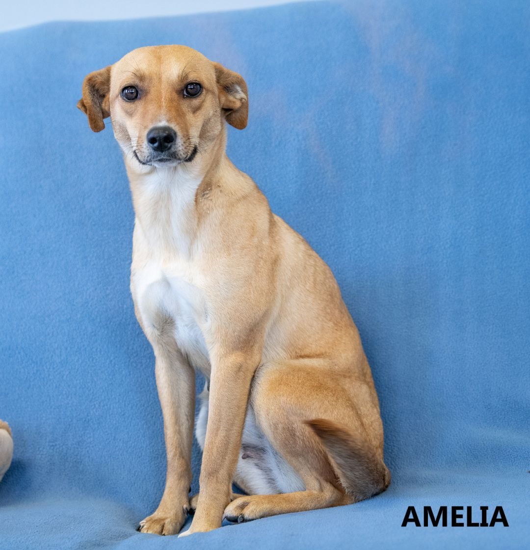 Amelia Washington Wilkes Humane Shelter