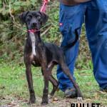 Adoptable (Official) Georgia Dogs for November 30, 2020