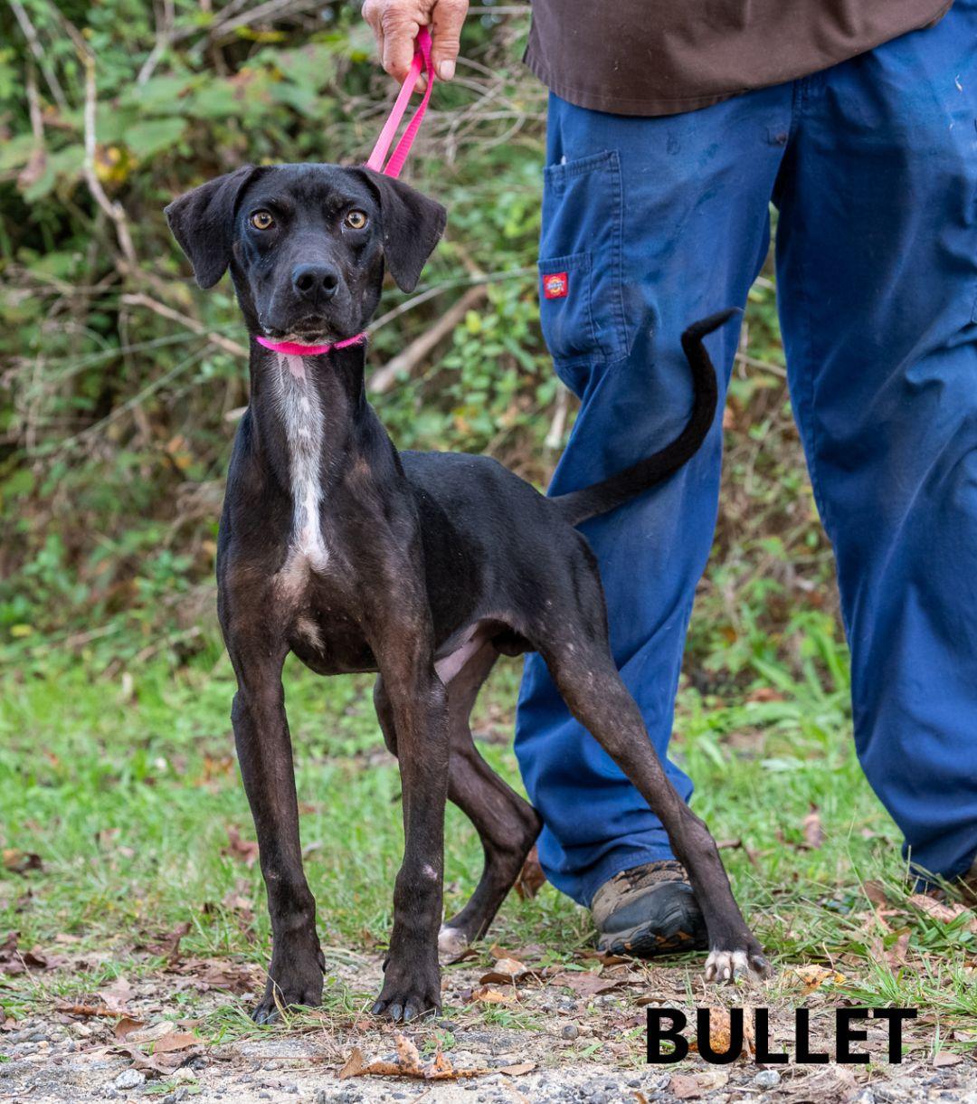 Bullet Washington Wilkes Humane Shelter
