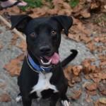 Adoptable (Official) Georgia Dogs for November 23, 2020