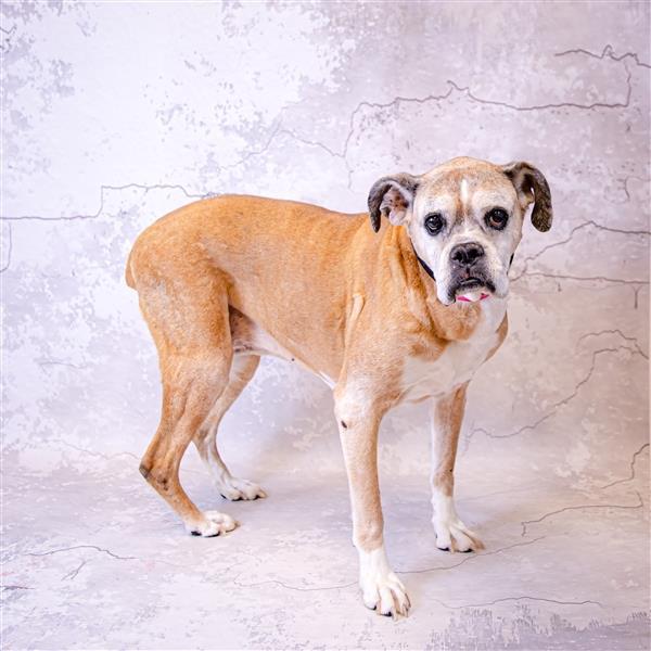 Gracie Gwinnett County Animal Shelter