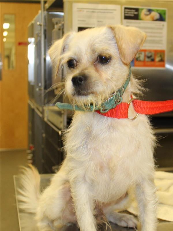 Lester Gwinnett County Animal Shelter