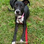 Adoptable (Official) Georgia Dogs for November 18, 2020