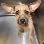 Adoptable (Official) Georgia Dogs for November 24, 2020
