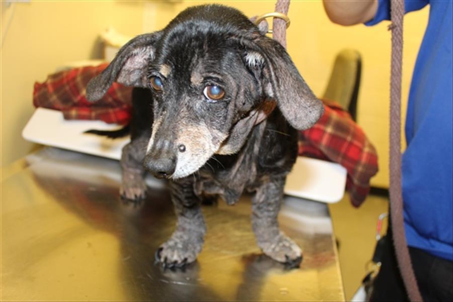 Riley Gwinnett County Animal Shelter