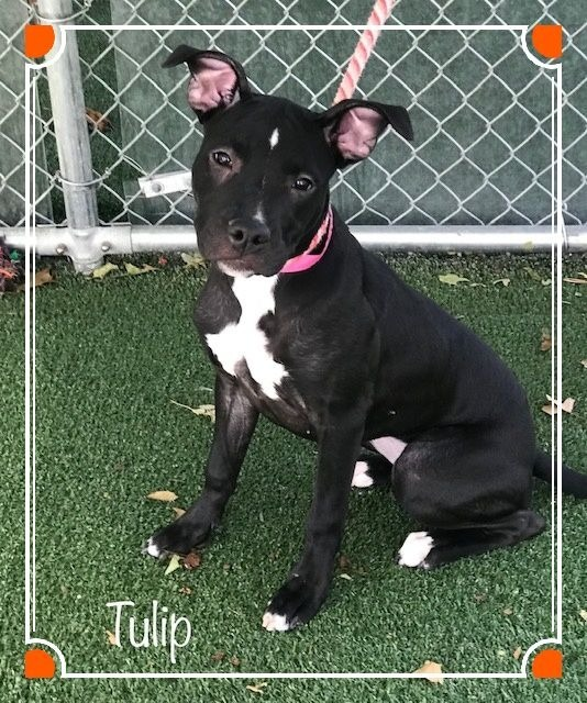 Tulip Cobb County Animal Shelter