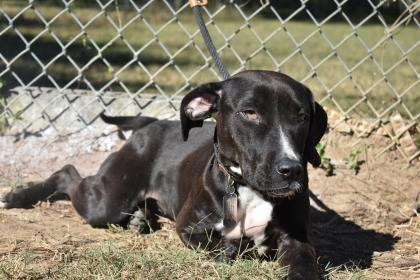 Angel Thomasville Thomas County GA Humane Society