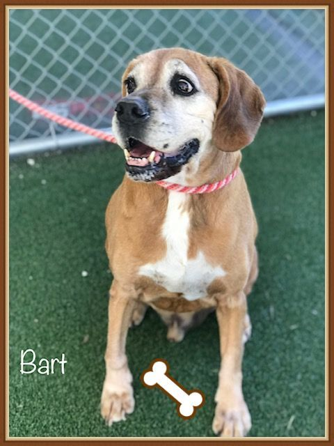 Bart Cobb County Animal Shelter