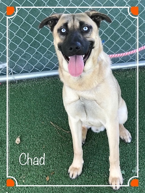 Chad Cobb County Animal Shelter