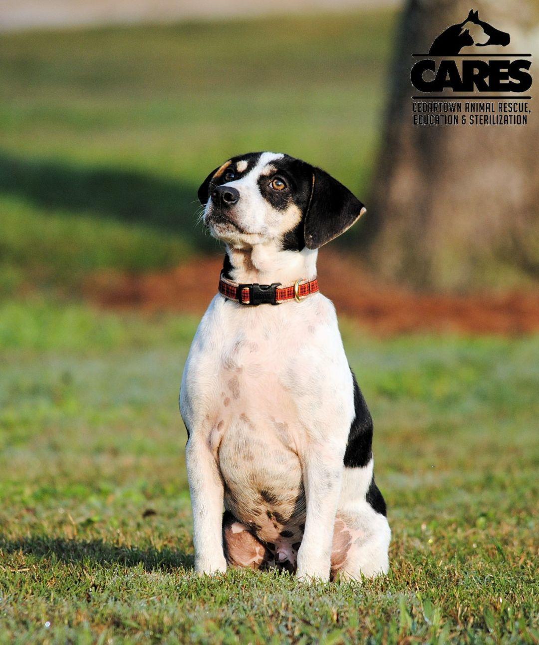 Dexter Cedartown Animal Rescue