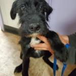 Adoptable (Official) Georgia Dogs for December 7, 2020