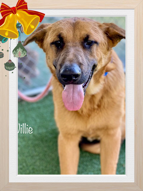 Willie Cobb County Animal Shelter