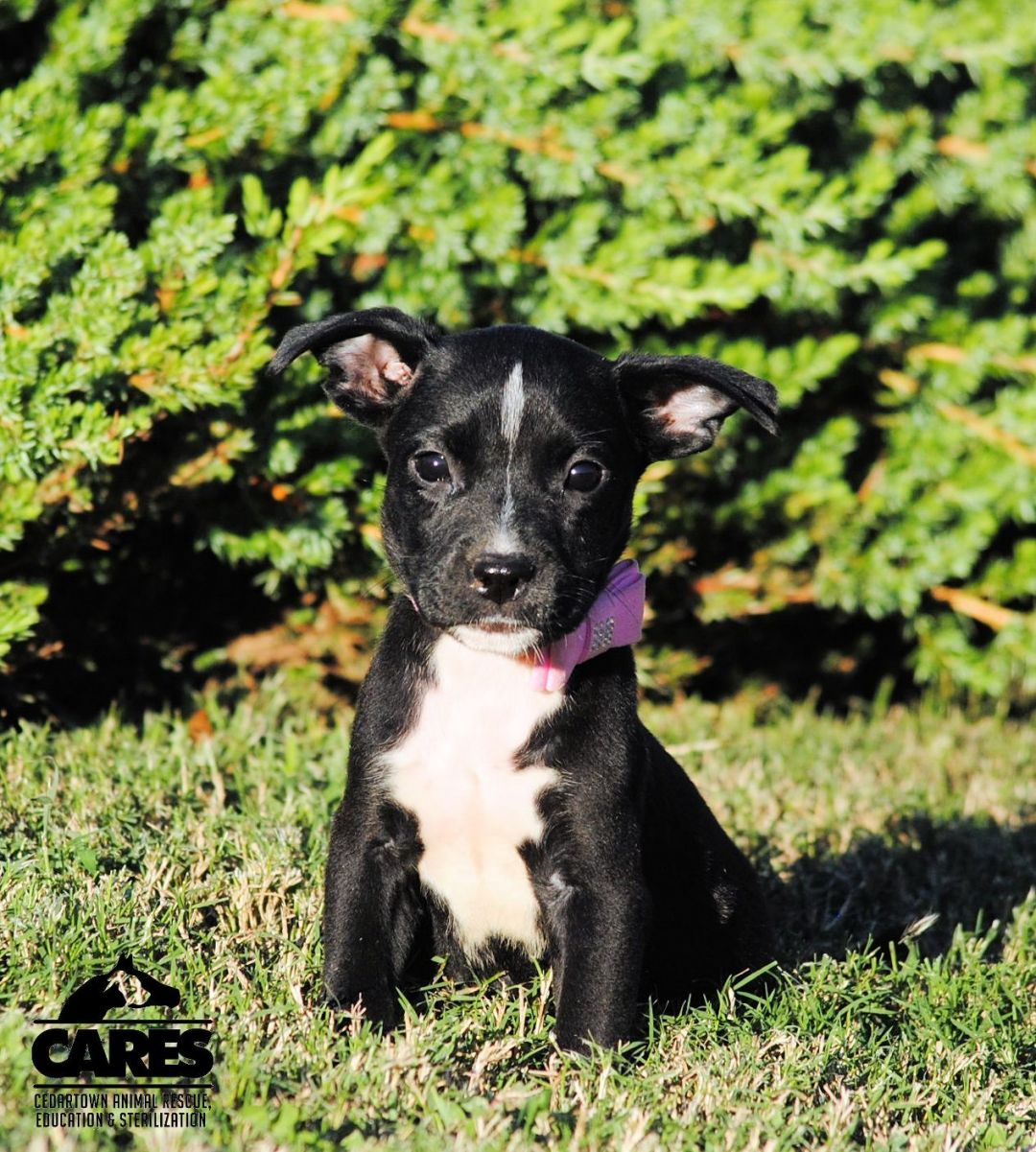 Willow Cedartown Animal Rescue