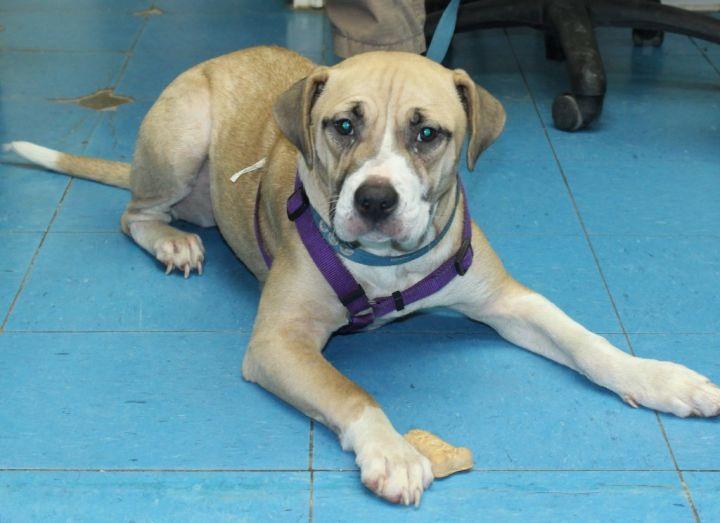Benita Bainbridge Decatur County Humane Society