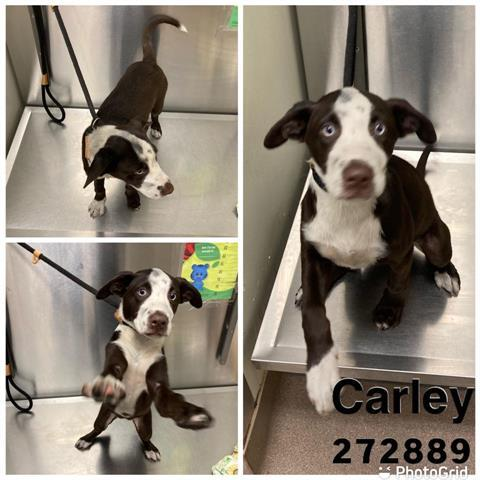 Carley Macon Bibb County Animal Welfare