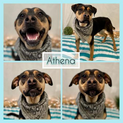 Athena Etowah Valley Humane Society