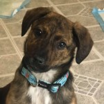 Adoptable (Official) Georgia Dogs for February 12, 2021
