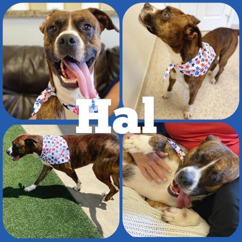 Hal Etowah Valley Humane Society