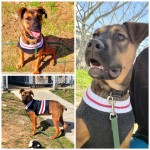 Adoptable (Official) Georgia Dogs for February 9, 2021