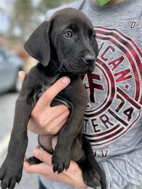 Linetti Fayette Humane Society GA