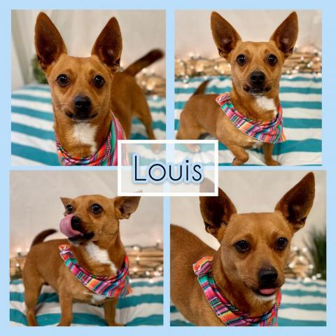 Louis Etowah Valley Humane Society