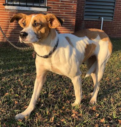 Rhonda Moultrie Colquitt County Humane Society
