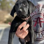 Adoptable (Official) Georgia Dogs for February 11, 2021