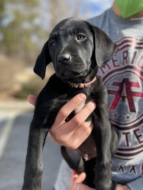 Santiago Fayette Humane Society GA