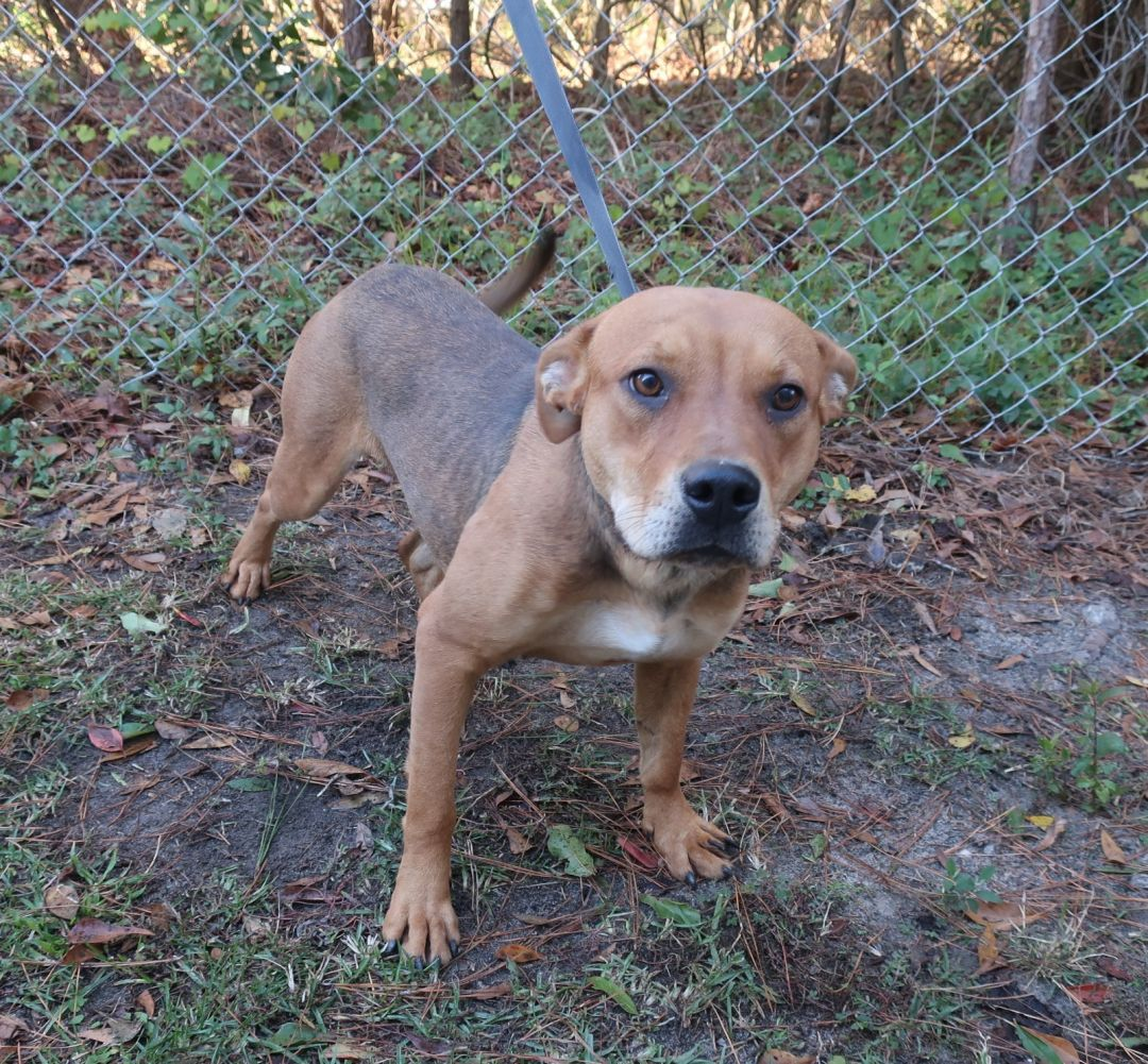 Almond Bulloch County Animal Shelter