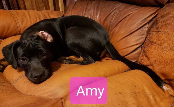 Amy Hooties Haven Animal Rescue Rome GA
