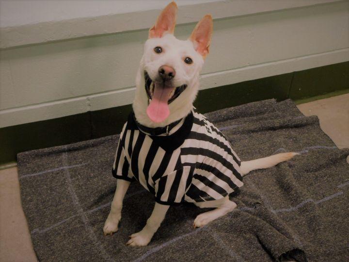 Casper Baldwin County Jail Dogs