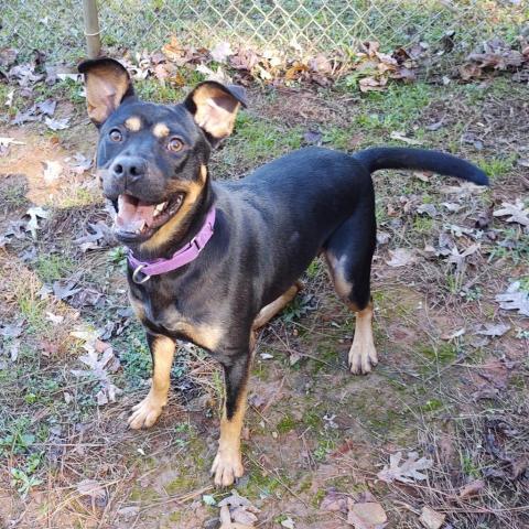 Cheyanne Humane Society of Harris County
