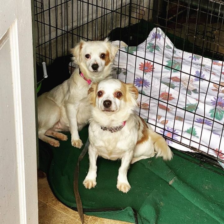 Fergie and Joan Jett Old Dog Home Conyers