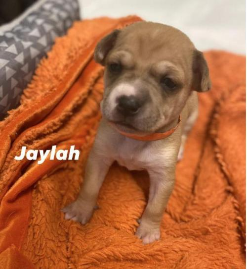 Jaylah Angels Among Us Rescue