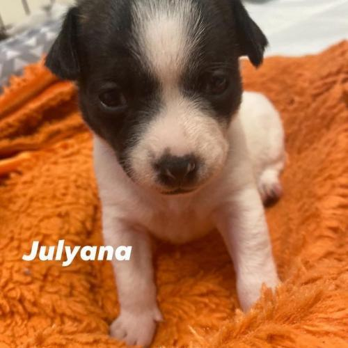 Julyana Angels Among Us Rescue