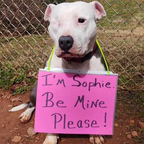 Sophie Humane Society of Harris County