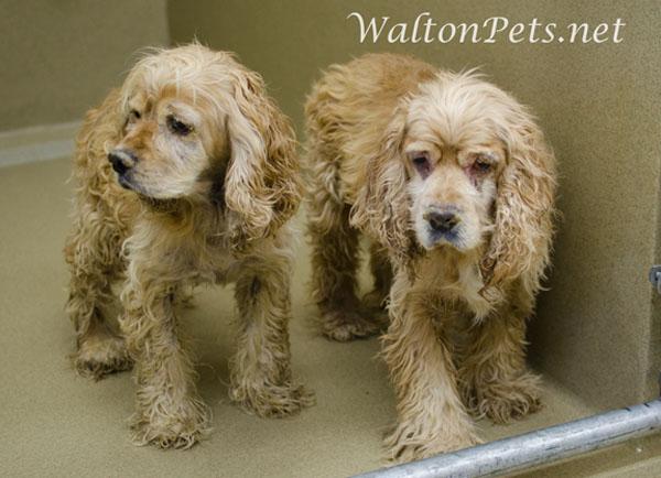 WaltonCockers
