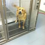 Adoptable Georgia Dogs for May 3, 2013