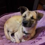 Adoptable Georgia Dogs for November 1, 2013