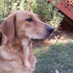 Adoptable Georgia Dogs for December 4, 2013
